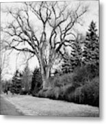 An Elm Tree At The Side Of A Road Metal Print