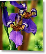 An Eyeful Iris Metal Print