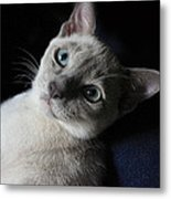 An Inquiring Mind Metal Print