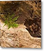 An Isolated Moss Plant Metal Print