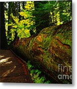 An Old Fallen Tree Metal Print