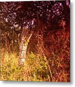 An Old Fence Post Metal Print