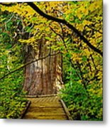 An Old Growth Douglass Fur In The Grove Of The Patriarches Mt Rainer National Park Metal Print