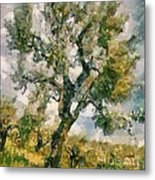An Old Olive Grove Metal Print