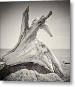 Analog Photography - Driftwood Metal Print