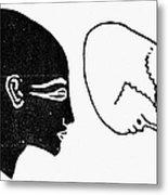 Anatomy: Human Cranium Metal Print