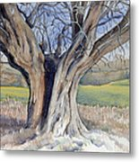 Ancient English Tree Metal Print