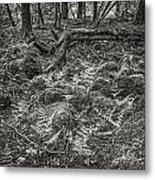 Ancient Grove Metal Print