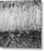 Ancient Sagebrush 2 Metal Print