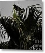 And A Crow Oh Oh In A Palm Tree Metal Print