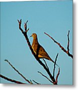 And A Dove In A Tree Metal Print