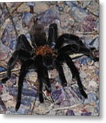 And Along Came A Little Spider .  Metal Print