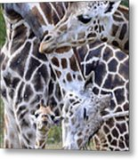 And Baby Makes Three Metal Print by Lori Tambakis