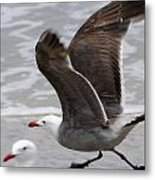 And Fly Metal Print