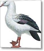 Andean Goose Metal Print