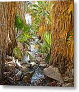 Andreas Creek In Andreas Canyon In Indian Canyons-ca Metal Print