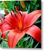 Andrea's Lily Metal Print