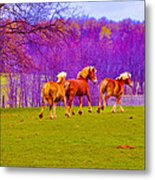 Andy's Horses Metal Print by BandC  Photography