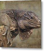 Anegada Ground Iguana - Houston Zoo Metal Print
