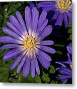 Anemone Blanda Blue Metal Print