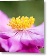 Anemone Flower Close Up Metal Print by Natalie Kinnear