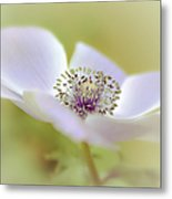 Anemone In White Metal Print