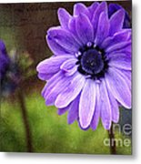 Anemone Kissed Metal Print