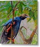 Angel Bird Of  North Moluccas Metal Print