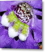 Angel Face Blue - With Extra Petals And 3 Stamen Metal Print