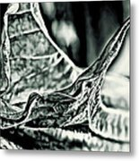 Angel Wing Variation Black White Metal Print