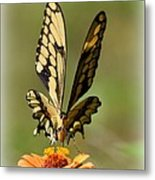 Angelic Butterfly  Metal Print