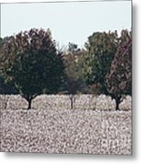 Angelic Cotton Fields Metal Print