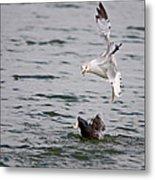 Angry Gull Metal Print