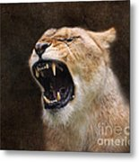 Angry Lioness Metal Print