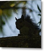 Angry Squirrel Metal Print