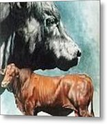 Angus Cattle Metal Print