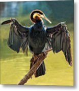 Anhinga Drying His Wings Metal Print