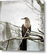 Anhinga On A Misty Morning Metal Print