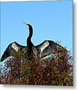 Anhinga Pride Metal Print by April Wietrecki Green