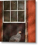 Animal - Bird - Chicken In A Window Metal Print
