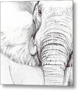 Animal Kingdom Series - Gentle Giant Metal Print
