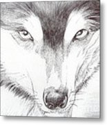 Animal Kingdom Series - Wild Friend Metal Print