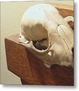 Animal Skull Mantel 1 12 2011 Metal Print