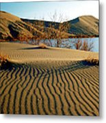 Animal Tracks In The Sand Metal Print