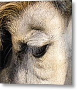 Animals Can Be Beautiful Metal Print