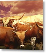 animals - cows- Longhorns La Familia  Metal Print