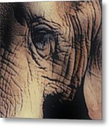 Animals Wrinkle Too Metal Print
