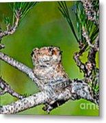 Annas Hummingbird Nest Metal Print