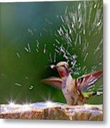 Anna's Hummingbird Taking A Shower Metal Print