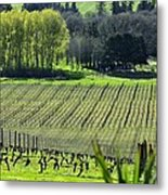 Anne Amie Vineyard Lines 23093 Metal Print